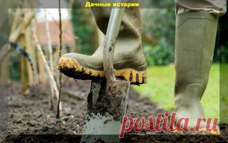 Огород без перекопки: один плюс и пять минусов | Дачные истории | Яндекс Дзен