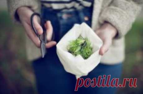 Письмо «6 многолетних овощей. Посади один раз, и получай урожай из года в год» — Rodovid — .Почта