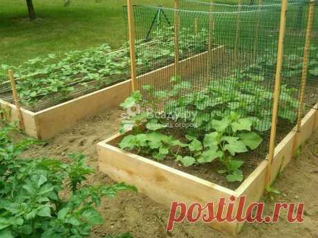 Собираем огурцы в мае, технология теплых грядок Выращиваем ранние огурцы и собираем урожай в мае. Выбор сорта, подготовка семян, уход за рассадой и подготовка грядок для сбора урожая огурцов в мае