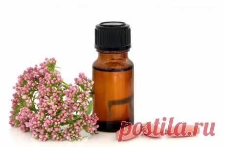 Омоложение организма запахом валерианы