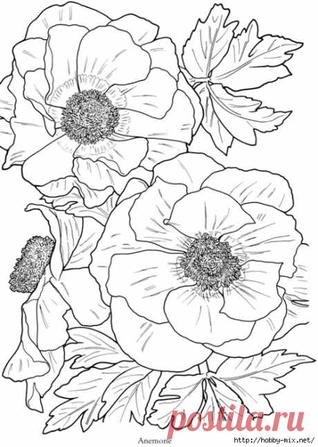 Очень красивые цветы. Шаблоны для творчества.