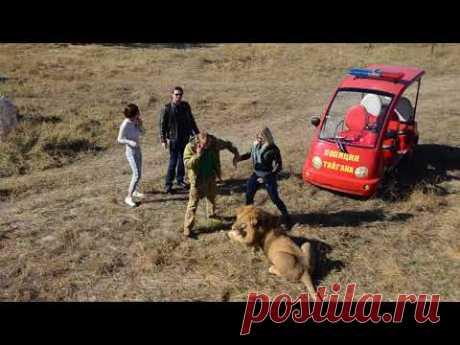 Эдгард  Запашный   среди львов делает фотосессию .Тайган .Крым