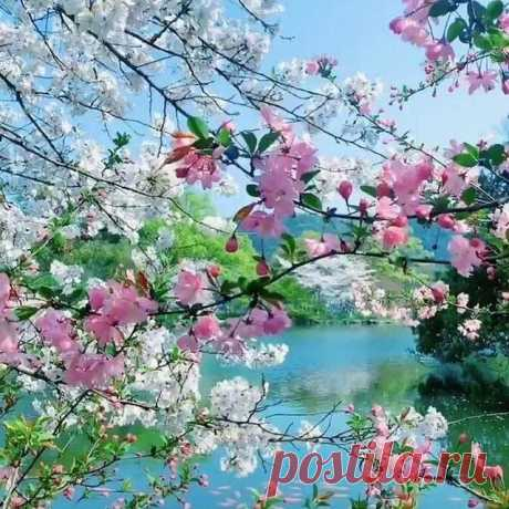 Photo by Larisa on April 12, 2021. May be an image of flower, tree and nature.