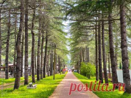 Почему я еще поеду отдыхать в Пицунду в Абхазии, несмотря на недавний инцидент с российскими туристами   Кутовой: путешествия и всё такое   Яндекс Дзен
