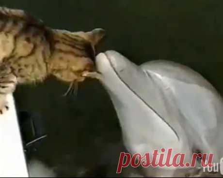 Неожиданные друзья среди животных — Наука и жизнь