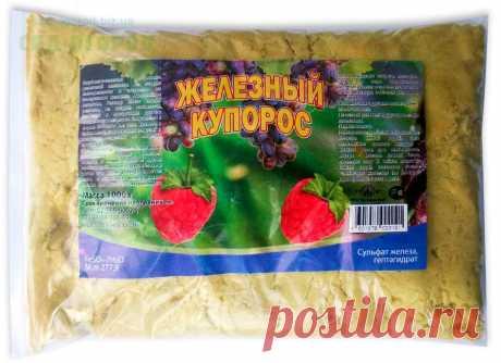 Особенности обработки роз железным купоросом осенью