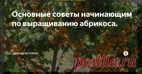 Основные советы начинающим по выращиванию абрикоса.