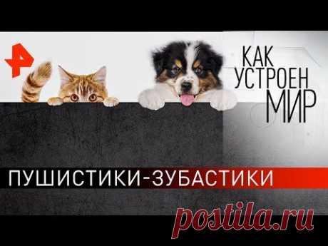 """Пушистики-зубастики. """"Как устроен мир"""" с Тимофеем Баженовым (26.02.20)."""