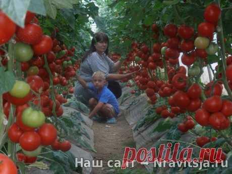 Волшебный бальзам для роста помидоров - ПАЛЬЧИКИ ОБЛИЖЕШЬ. Вкуснотища необыкновенная