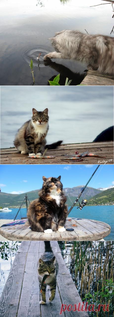 Котэ рыбаки