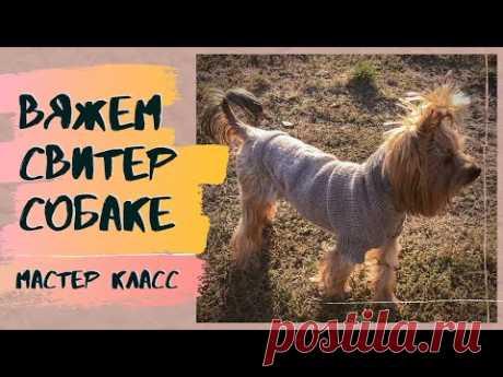 Одежда для собак спицами. Как связать свитер для собаки. МК для начинающих