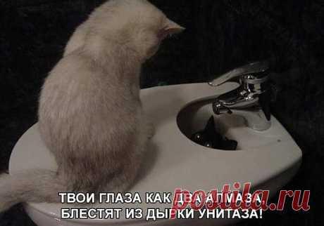 Анекдоты в пятницу (фууу, ну опять эта котоматрица)))