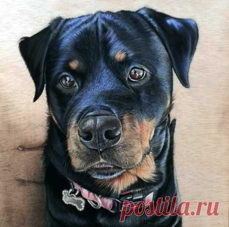 Собаки в изобразительном искусстве, часть 27 – Блог. Run, пользователь Марина Николаева   Группы Мой Мир
