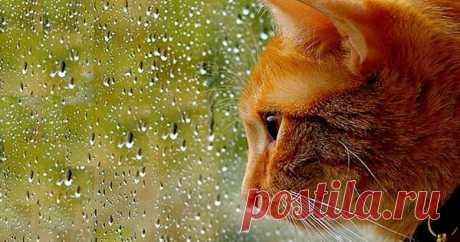 Как кошка предсказывает погоду?   Мир домашних животных   Яндекс Дзен