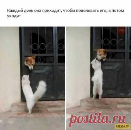 А говорят ещё как кошка с собакой))) Этот снимок как нельзя лучше опровергает поговорку.Это Любовь!)))
