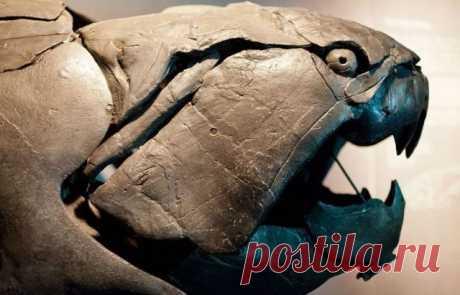 Жуткие доисторические создания - 10 фото - Поздравления.тк - Поздравления и пожелания в стихах