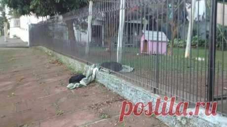 El perro de casa ha repartido la manta con el perro errante que se hiela (6 fotos)   el Diablo toma el perro de 8 meses, Salvado en Brasil, por el apodo de Lana ha olvidado que vivir en el miedo en la calle, pero claramente recuerda todavía que tal ser el vagabundo. Cuando Lana ha visto al perro errante, que se preparaba para encontrar la noche fría detrás de la cerca de su ama, ha repartido aquel poca, que disponía. «He pensado:« Como es hermoso que ha hecho para el amigo », — cuenta Suele...