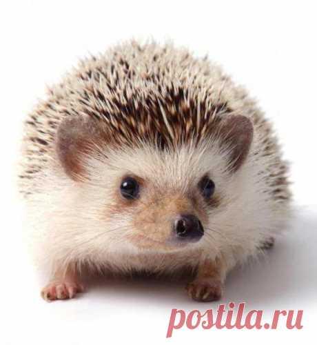 104 карточки в коллекции «Милые ежики» пользователя emma011 в Яндекс.Коллекциях