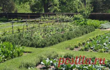 Задернение почвы: для чего нужно сеять траву в междурядья? Какие травы использовать для задернения - Автор Юлия Кривенко - Журнал Женское мнение