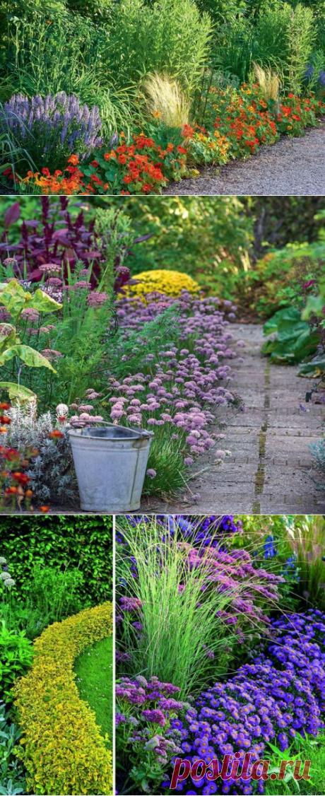 Бордюры для цветников из растений