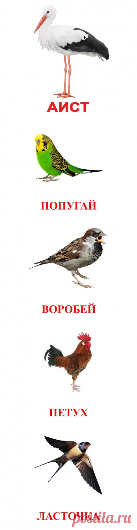 """""""Птицы&quot cards;. - Hand-made articles with children 