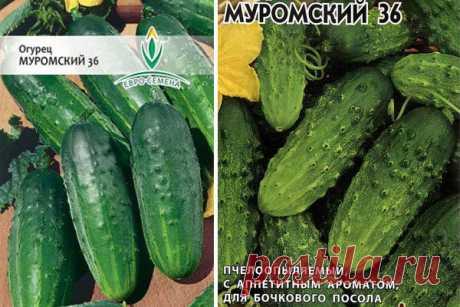 Огурец Муромский: описание и фото, отзывы, характеристика сорта, достоинства и недостатки, особенности выращивания, урожайность