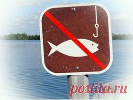 Как не попасть на штраф во время нерестового запрета – это должен знать каждый рыболов | Блоги о даче и огороде, рецептах, красоте и правильном питании, рыбалке, ремонте и интерьере
