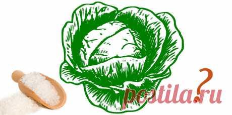 Засолка капусты: Сколько соли на 1 кг капусты нужно положить? | Дача