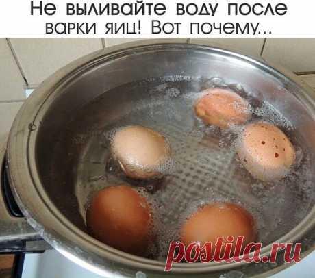 Не выливайте воду после варки яиц! | OK.RU