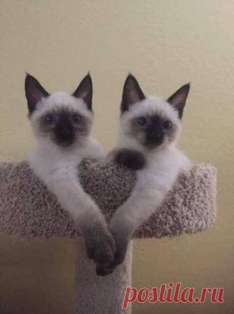 18представителей семейства кошачьих, которые растопят сердце даже заядлого собачника