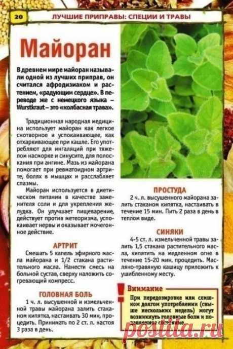 ТАКИХ РЕЦЕПТОВ ВЫ БОЛЬШЕ НЕ НАЙДЕТЕ!     Целебные растения и приправы для нашего здоровья.