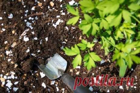 Как сделать удобрение из яичной скорлупы и в чем его польза