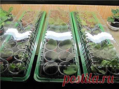 Стимуляторы роста растений: 3 рецепта | 6 соток