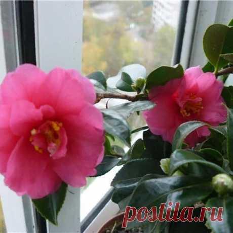 На данном изображении может находиться: растение, цветок и природа
