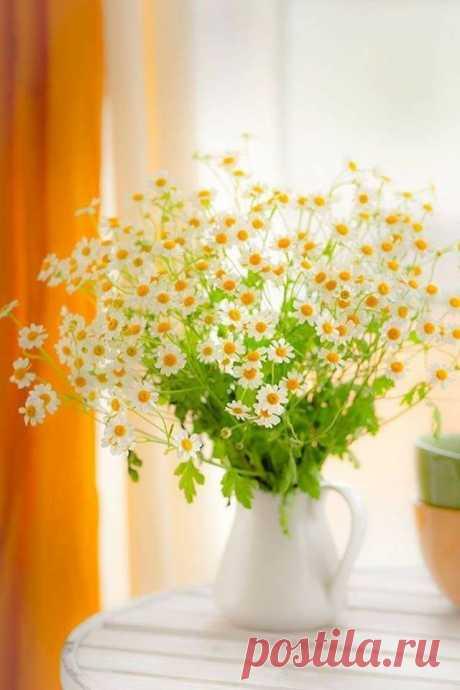 В цветах – душа, и жизнь, и вдохновение! Говорят, что у людей, которые любят ромашки, добрая душа! ...Цените каждое МГНОВЕНЬЕ, у жизни правила Просты: кто не наполнил СЕРДЦЕ.. счастьем - ПУСТЫ...Наполняйте своё сердце любовью Друзья и будьте СЧАСТЛИВЫ.. А жизнь моя... сложилась, как сложилась... И на другую я её не променяю... В ней, что должно было - случилось! А дальше...? Дальше... поживу - узнаю!!! На данном изображении может находиться: растение, цветок и в помещении