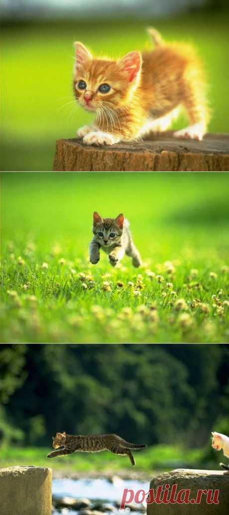 Котяшки - милашки