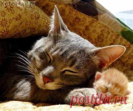 Кошка-мамочка