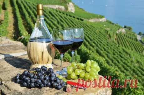 Рецепт виноградного вина 1. Сбор и переработка урожая. Чтобы на винограде остались дикие дрожжи, нужные для брожения, ягоды следует собирать только в сухую солнечную погоду. Минимум 2-3 дня перед этим не должно быть дождя. Для виноделия подходят лишь созревшие плоды. В недозревшем винограде слишком много кислоты, ухудшающей вкус готового напитка. В перезревших ягодах начинается уксусное брожение, которое впоследствии может испортить всё сусло (отжатый сок). Также не рекомендую брать падалицу, по