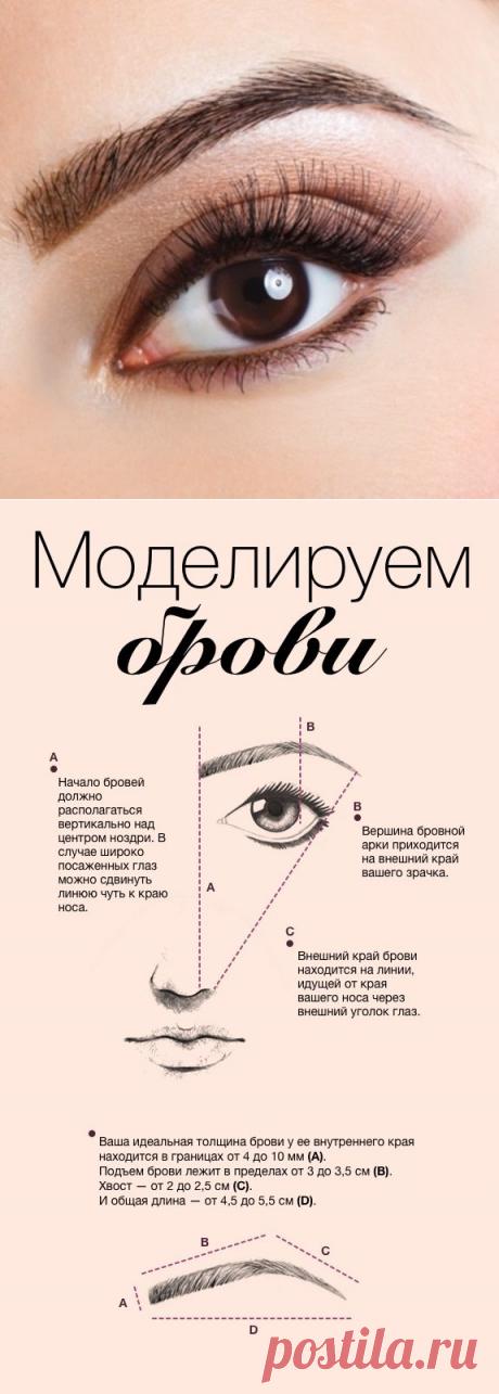 Инфографика: моделируем брови. Научный подход - Я Покупаю