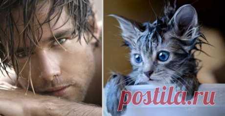 Котики и парни | Четвероногий юмор