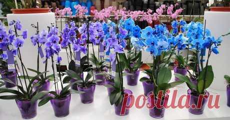 Правильная рассадка орхидеи — Полезные советы