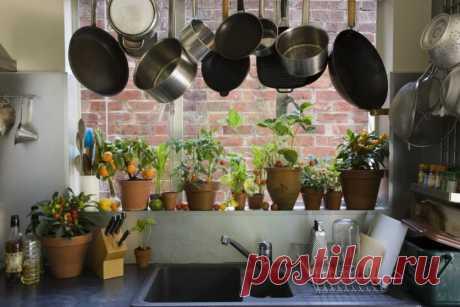 Комнатные растения для кухни — Роскошь и уют