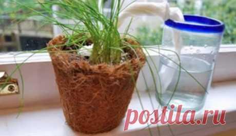 Как организовать автополив растений? — Полезные советы