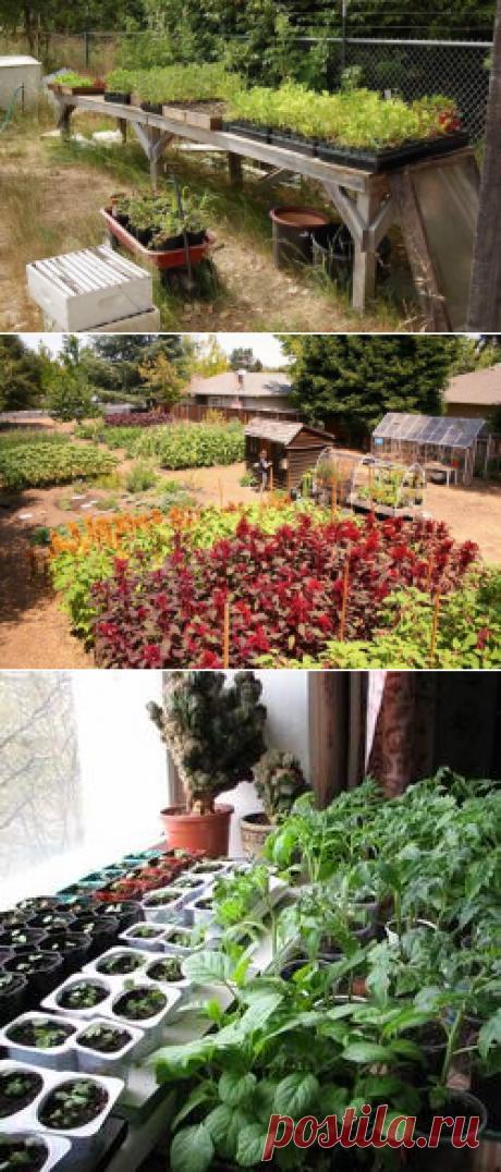 Выращивание овощей по Джону Джевонсу – небывалый урожай