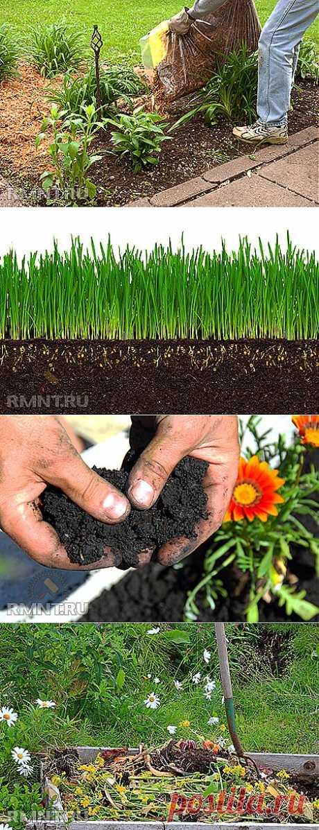 Органическое земледелие. Хватит разрушать почву перекапыванием и прополкой-продолжение.