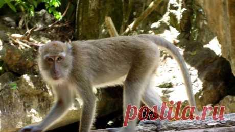 ЗАБАВНЫЕ ОБЕЗЬЯНЫ ВИДЕО Ссылка на видеоhttps://youtu.be/xRRmvBHJ820#Обезьянки  #обезьянки #ОсторожноОбезьянки #мартышки #оьезьянкиИГрабители #обезьяныArs simia natura...