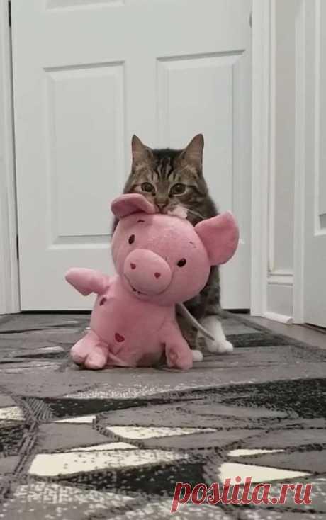 Диего — особенный МУРлыка, у которого есть свои странности и привычки. У малыша проблемы со здоровьем, из-за которых он чуть меньше размером, чем другие питомцы его возраста.  Кот не может играть так же, как его сородичи, но зато он умеет и любит носить за собой игрушки. Раньше у него не было любимчиков, пока он не нашёл розовую плюшевую свинью…