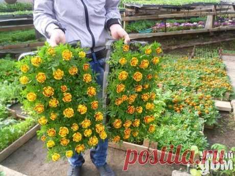 Los consejos útiles a los horticultores