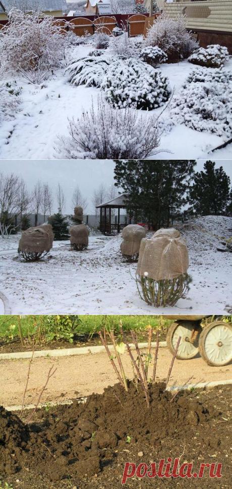 Лучшие материалы для зимнего укрытия растений.