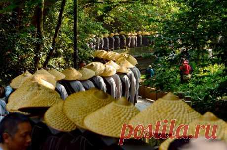 ФОТО ДНЯ. Почему все в одинаковых шляпах и куда собралась такая очередь?